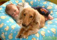 Собака - друг человека и источник заражения паразитами