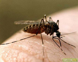 Заражение через кровососущих насекомых