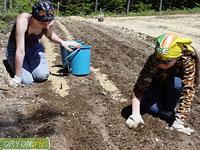 Паразиты в почве