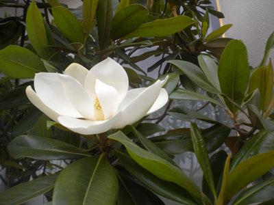 Цветы на дереве в Китае